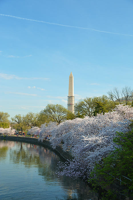 Cherry Blossoms 2013 - 040 Print by Metro DC Photography