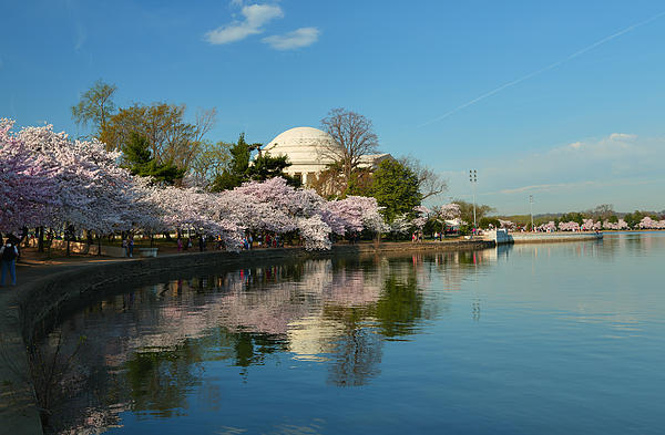 Cherry Blossoms 2013 - 041 Print by Metro DC Photography