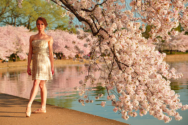 Cherry Blossoms 2013 - 080 Print by Metro DC Photography