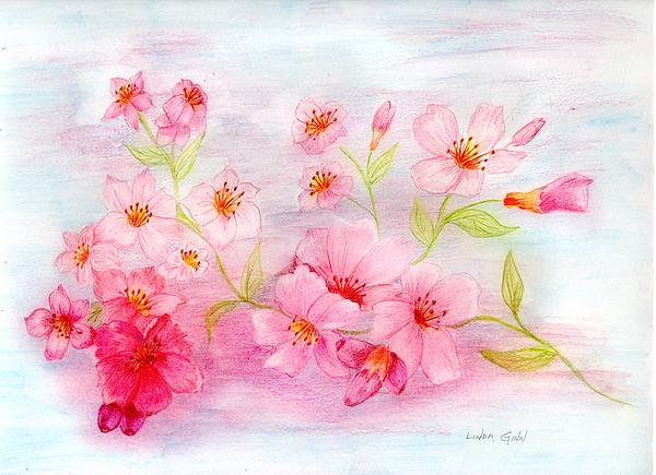 Cherry Blossoms Print by Linda Ginn