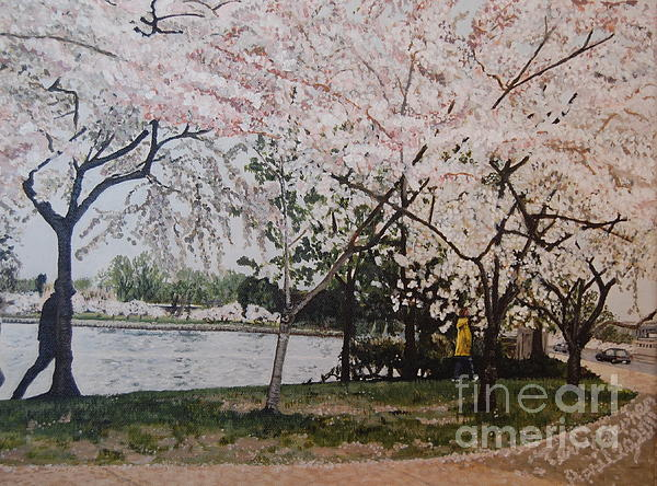 Cherry Blossoms Print by Terry Stephen