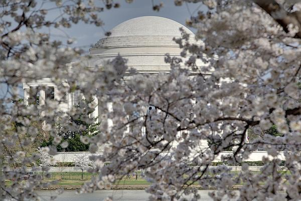 Cherry Blossoms With Jefferson Memorial - Washington Dc - 011334 Print by DC Photographer