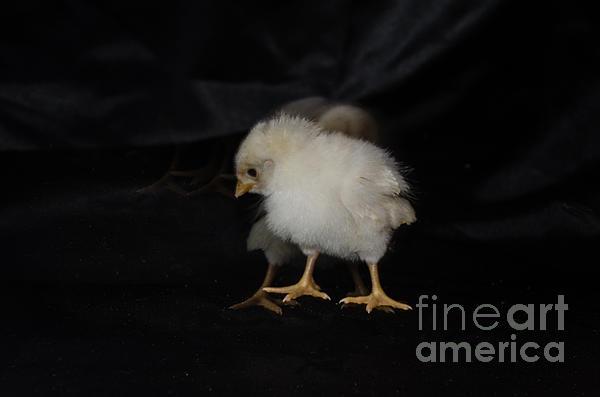 Donna Brown - Chicken Dance