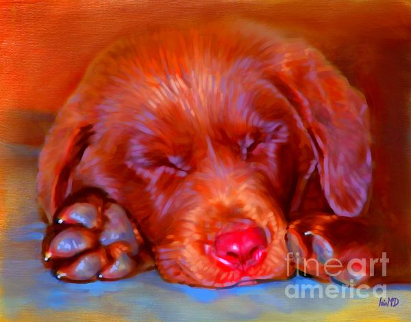 Chocolate Labrador Puppy Print by Iain McDonald