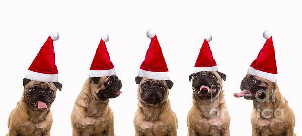 Christmas Caroling Dogs Print by Edward Fielding