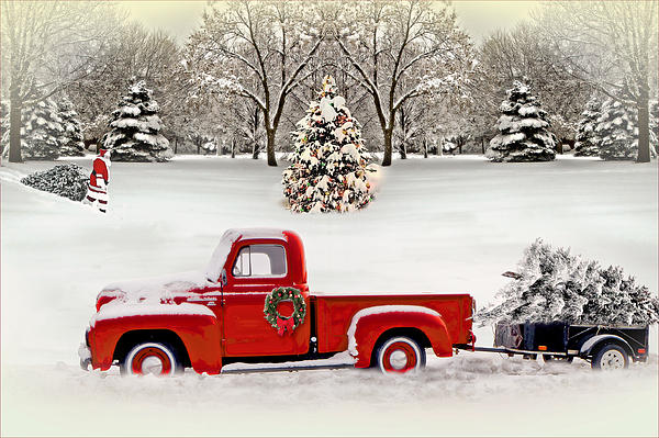 Christmas Trees By John Anderson