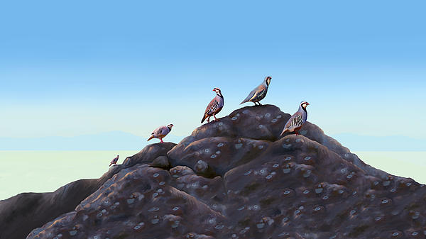 Chuckers - Calling In The Flock Print by Laird Roberts