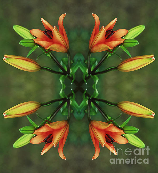 Circle Of Life Print by Inspired Nature Photography By Shelley Myke