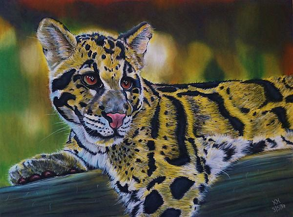 Kevin Hubbard - Clouded Leopard