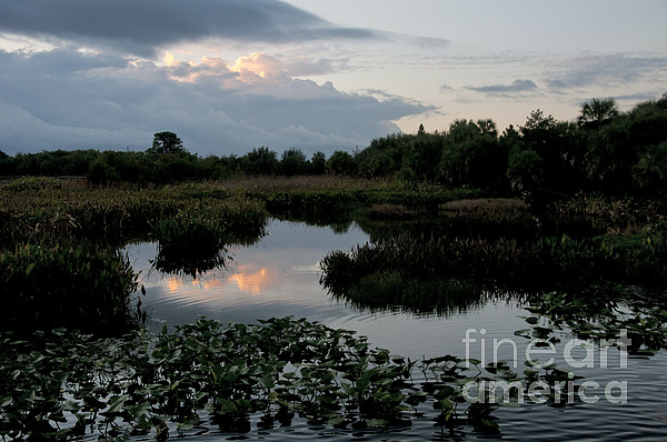 Clouds Over Green Cay Wetlands Print by Mark Newman