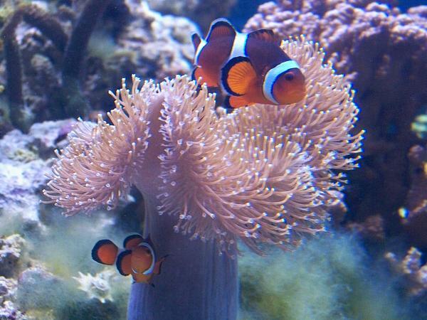 clownfish voice changer ts3