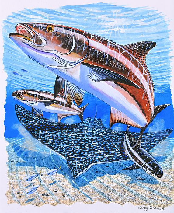 Cobia On Rays Print by Carey Chen