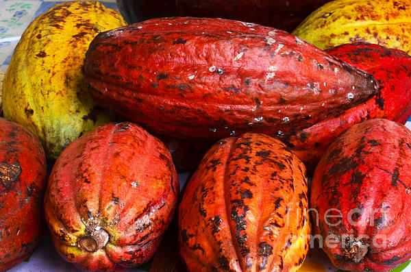 Cocoa Pods Print by Pravine Chester