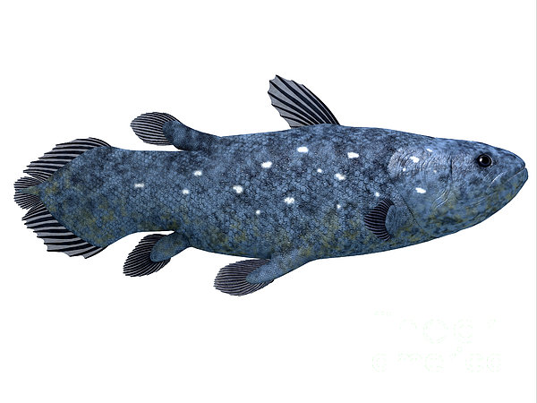 Coelacanth Fish On White Print by Corey Ford