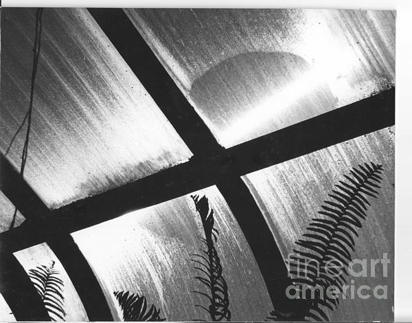 Cold Sun Print by Susan M Fleischer