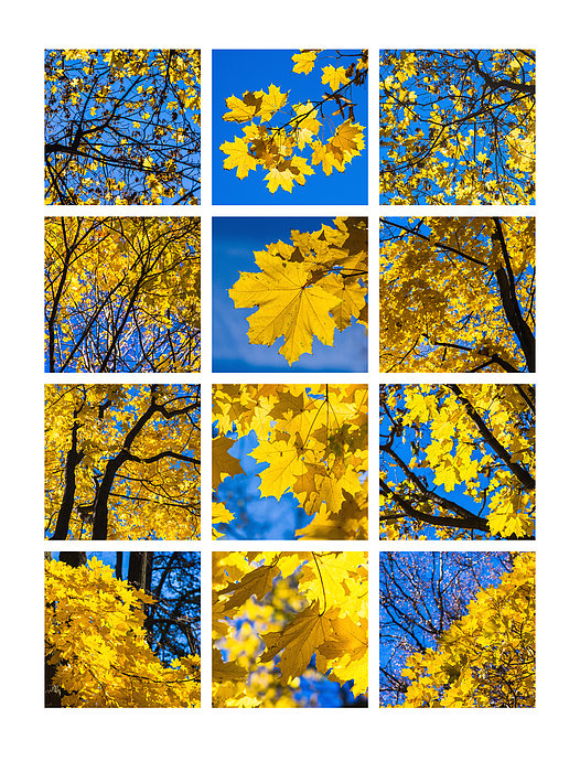Collage October Blues Print by Alexander Senin