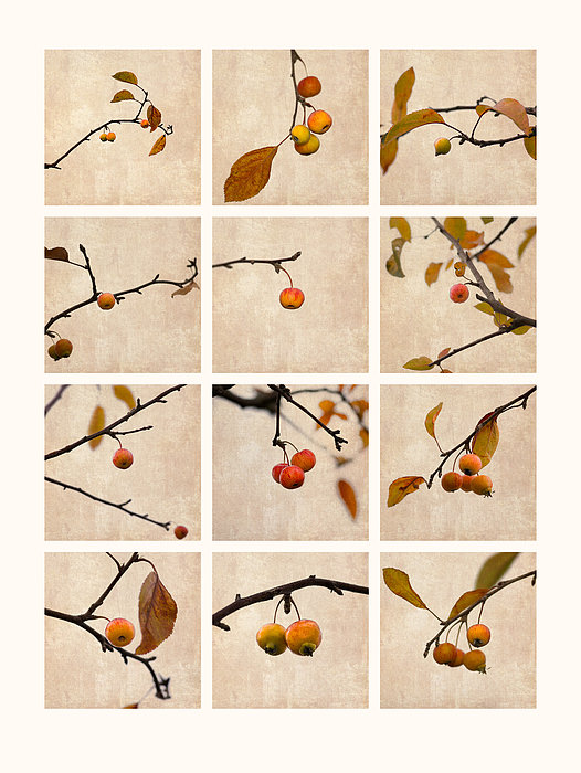 Collage Paradise Apple Print by Alexander Senin