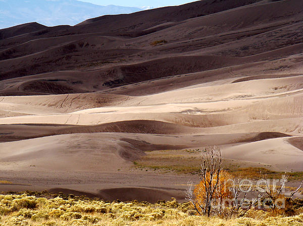 Colorado Sand Dunes Print by Eva Kato