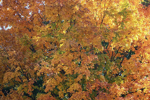 Colorful Autumn Print by Laura Watts