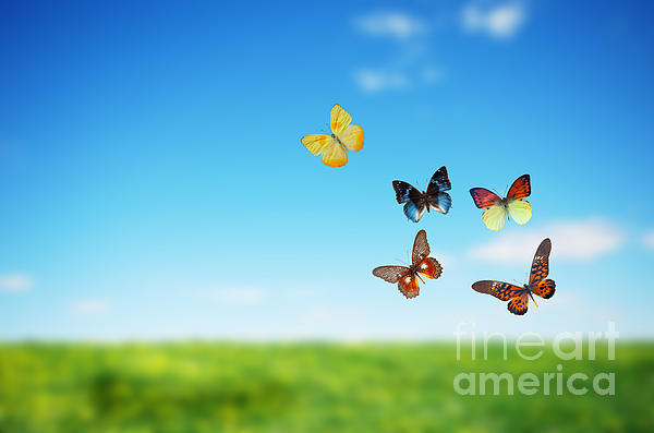 Colorful Buttefly Spring Field Print by Michal Bednarek