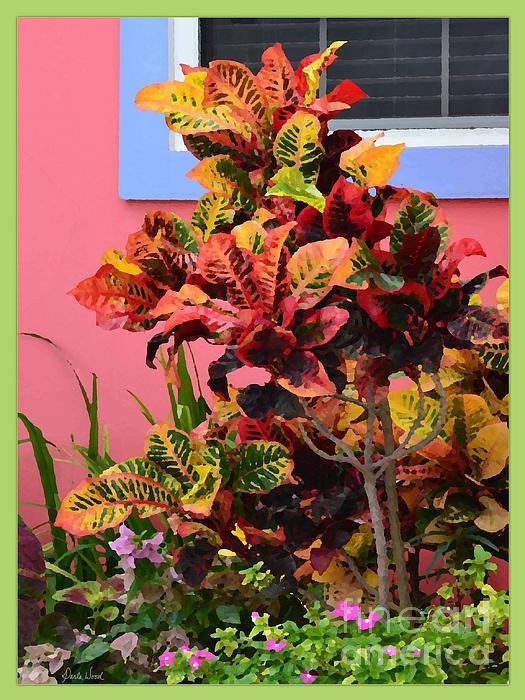 Darla Wood - Colorful Croton