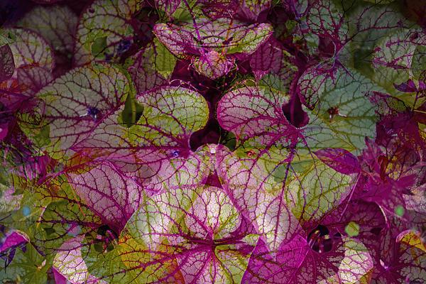 Colorful Leaf Print by Eiwy Ahlund