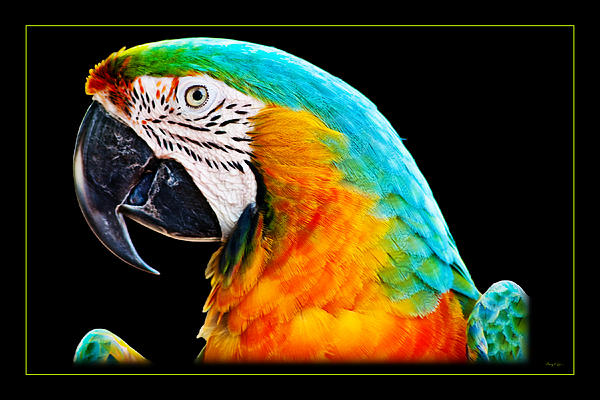 Gary Cain - Colorful Macaw Parrot Portrait