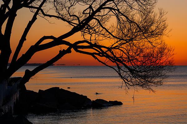 Colorful Quiet Sunrise On Lake Ontario In Toronto Print by Georgia Mizuleva