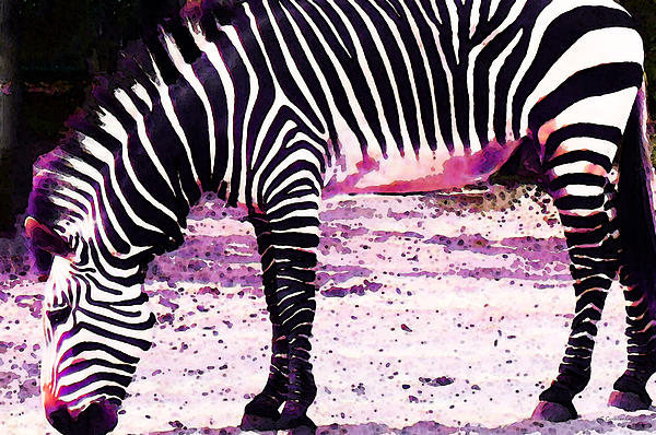 Colorful Zebra 2 - Buy Black And White Stripes Art Print by Sharon Cummings