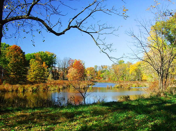 Colors Of Fall Print by Diane Reed