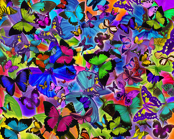 Colours Of Butterflies Print by Alixandra Mullins