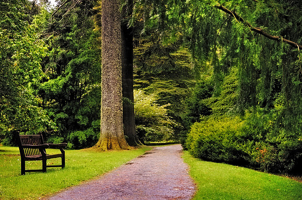 Come Sit With Me. Benmore Botanical Garden. Scotland Print by Jenny Rainbow