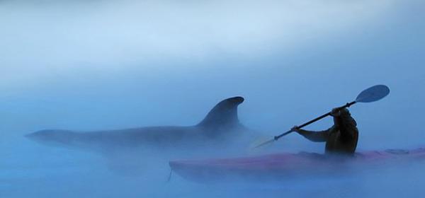 Claudio Bacinello - Companions in the Mist