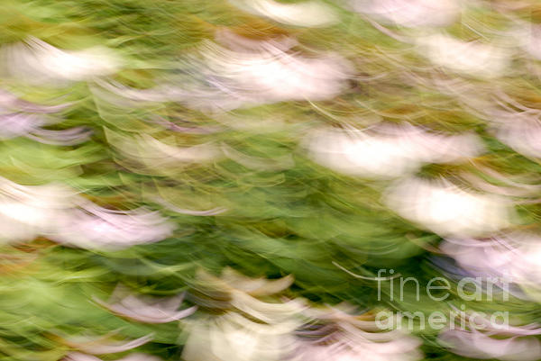 Coneflowers In The Breeze Print by Paul W Faust -  Impressions of Light