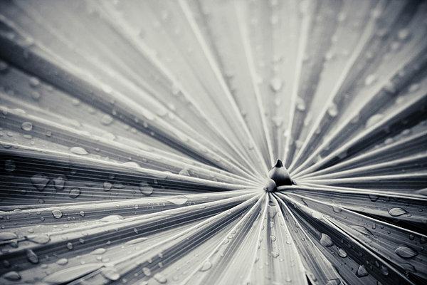 Convergence Print by Adam Romanowicz