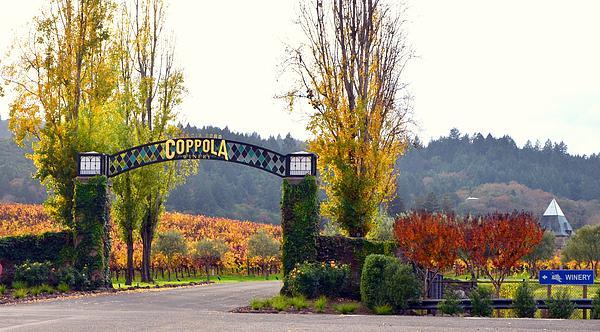 Coppola Winery Print by Antonia Citrino