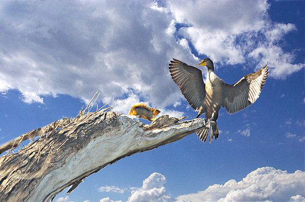 Cormorant Close Encounter With Tree Squirrel 1 Print by Roy Williams