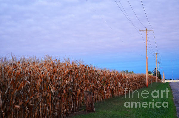 Cornfield In Autumn Print by Luther   Fine Art