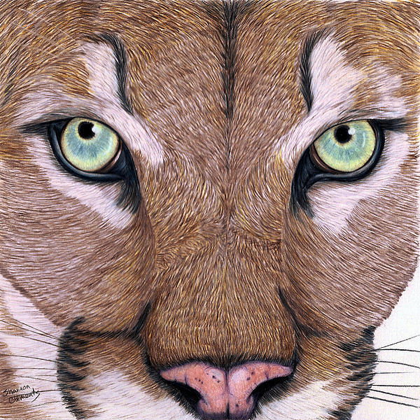Cougar Eyes By Shannon Clements