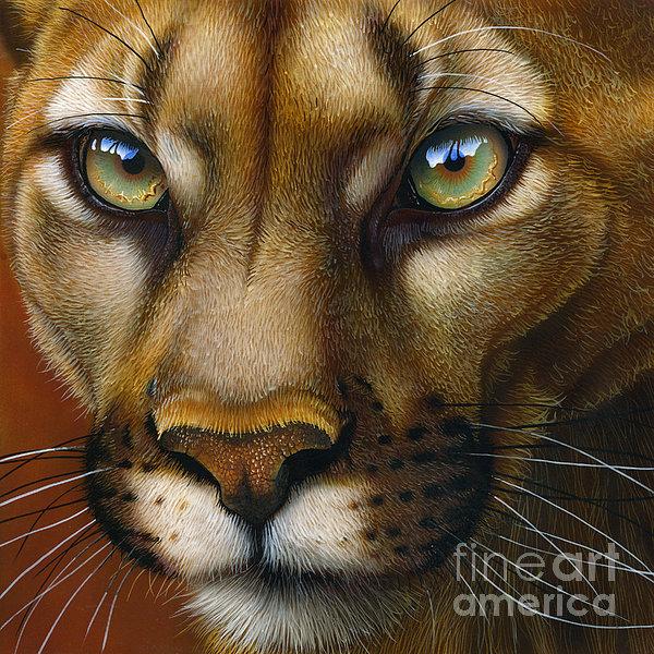 Cougar October 2011 Print by Jurek Zamoyski