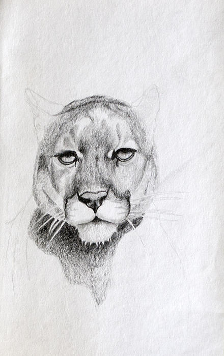 Cougar Print by Wade Clark
