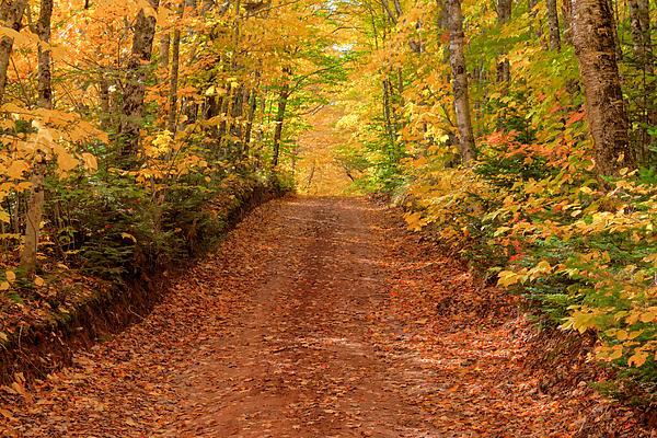 Country Lane In Autumn Print by Matt Dobson