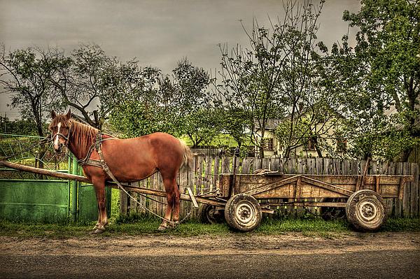 Country Life Print by Evelina Kremsdorf