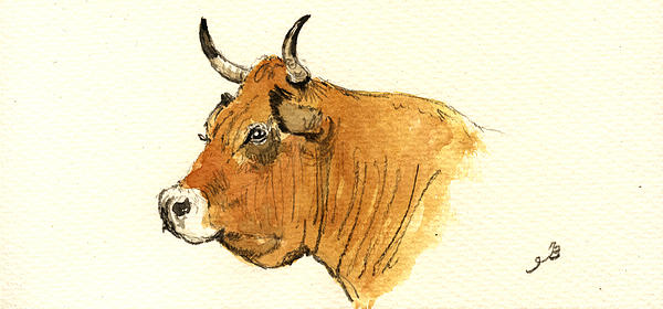 Cow Head Study Print by Juan  Bosco