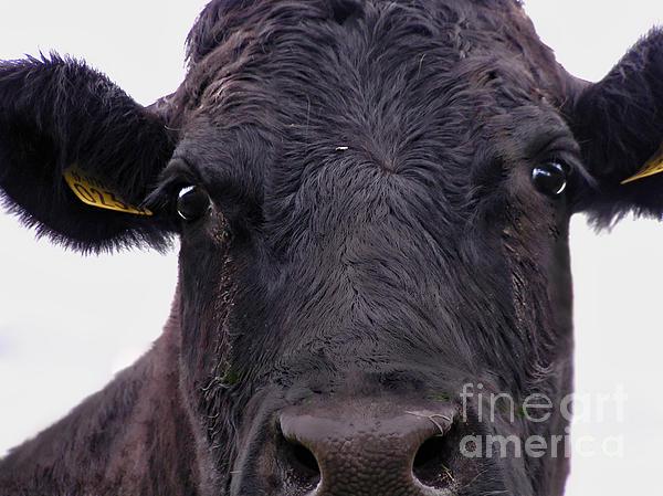 Alexandra Jordankova - Cow Pretending To Be a Bull