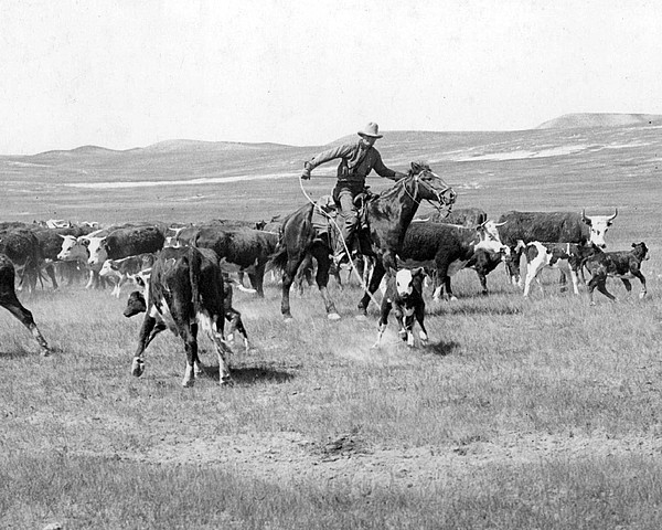 Cowboy Western Cattle Drive Vintage Print by Retro Images Archive
