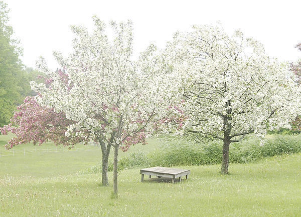 Crab Apple Blossoms Print by Susan Crossman Buscho