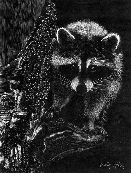 Dustin Miller - Curious Raccoon