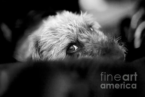 Cute Pup Sneek A Peek Print by Natalie Kinnear