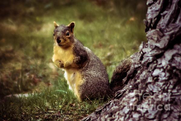 Cute Squirrel Print by Robert Bales